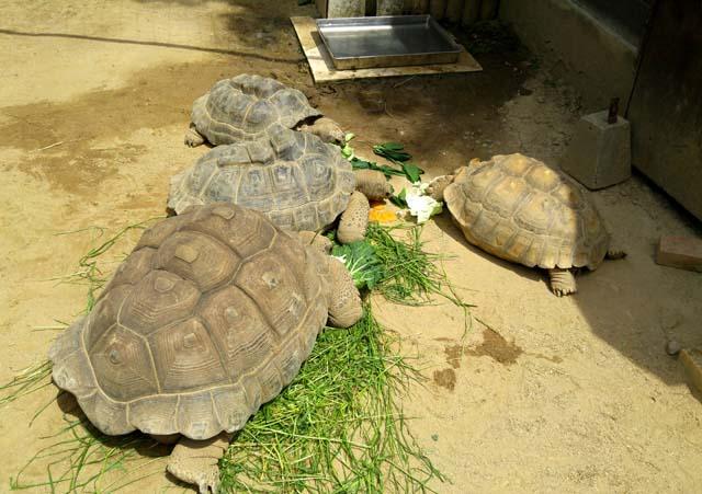 埼玉こども動物自然公園-なかよしコーナー